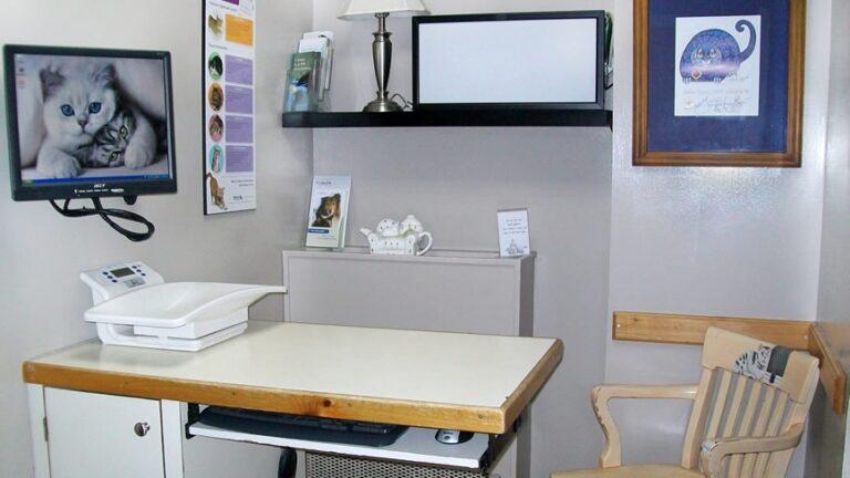 Cat Clinic Exam room