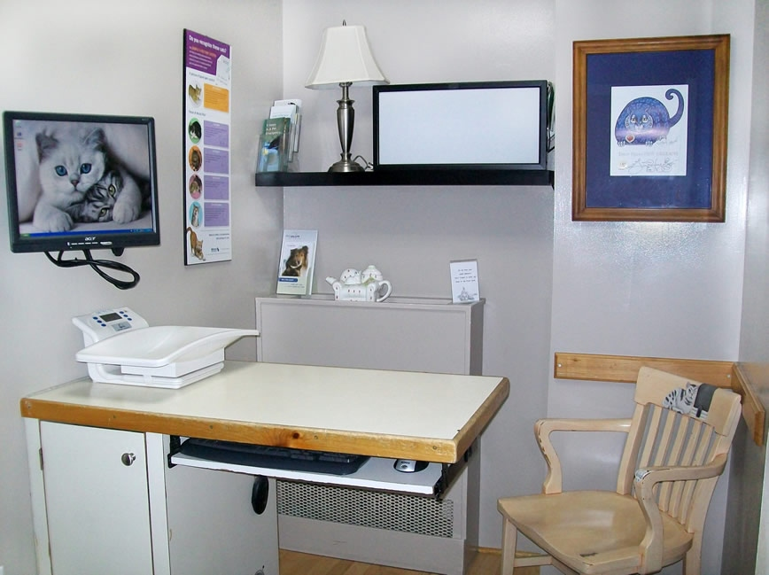 Cat Clinic Exam room